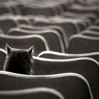 Schrödingerova kočka